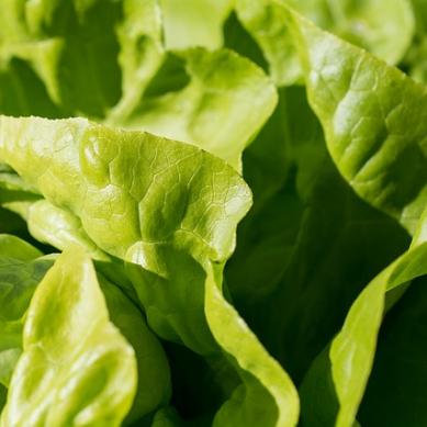 Inflammation kan dämpas med färgämne i grönsaker